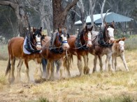 openmrps_working clydesdales