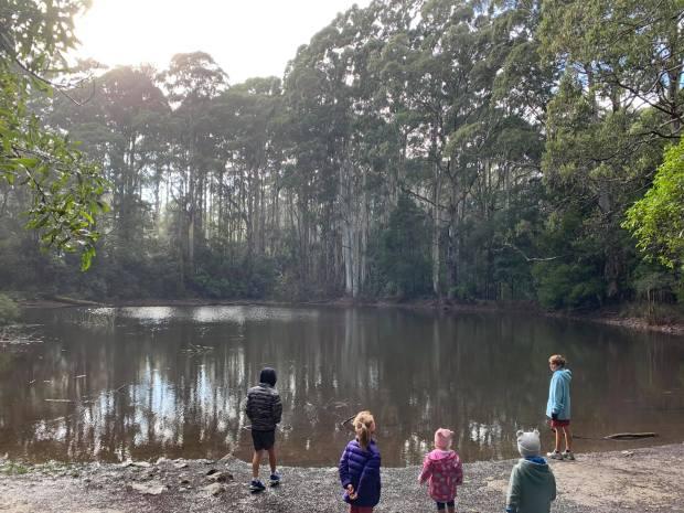 Lake trees kits