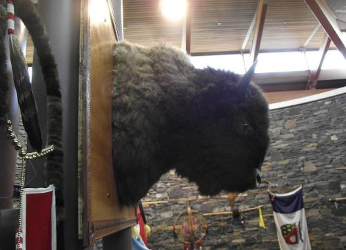 In Cree culture, the buffalo is believed to bring wisdom and healing. ""