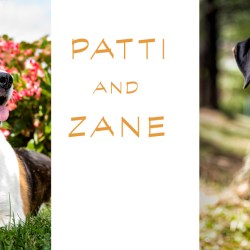 Rescue Dogs Patti and Zane