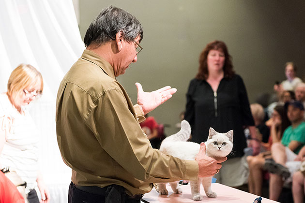 Catwalk: Tales from the Cat Show Circuit Movie Still 1