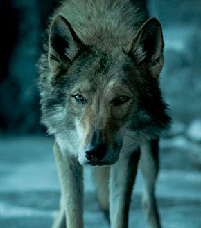 Alpha Movie Featured Image