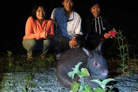 奄美ナイトツアー アマミノクロウサギ