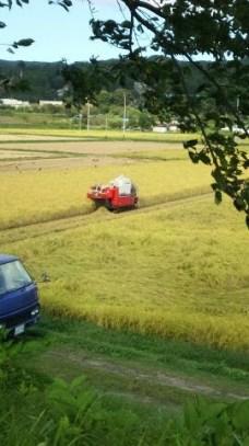 秋です。稲刈りが始まっています。