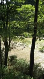 我が家の後ろを流れる久慈川。今日は台風の影響で水が濁っていますが、10月下旬にはサケの遡上も見られますよ。(関岡 女性)