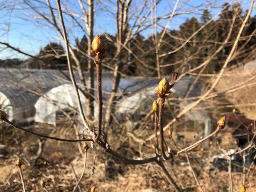 そろそろ春をあちらこちらに感じはじめた野山(東舘・男性)