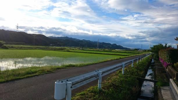 戸塚の田園風景。夕方です。(戸塚・女性)