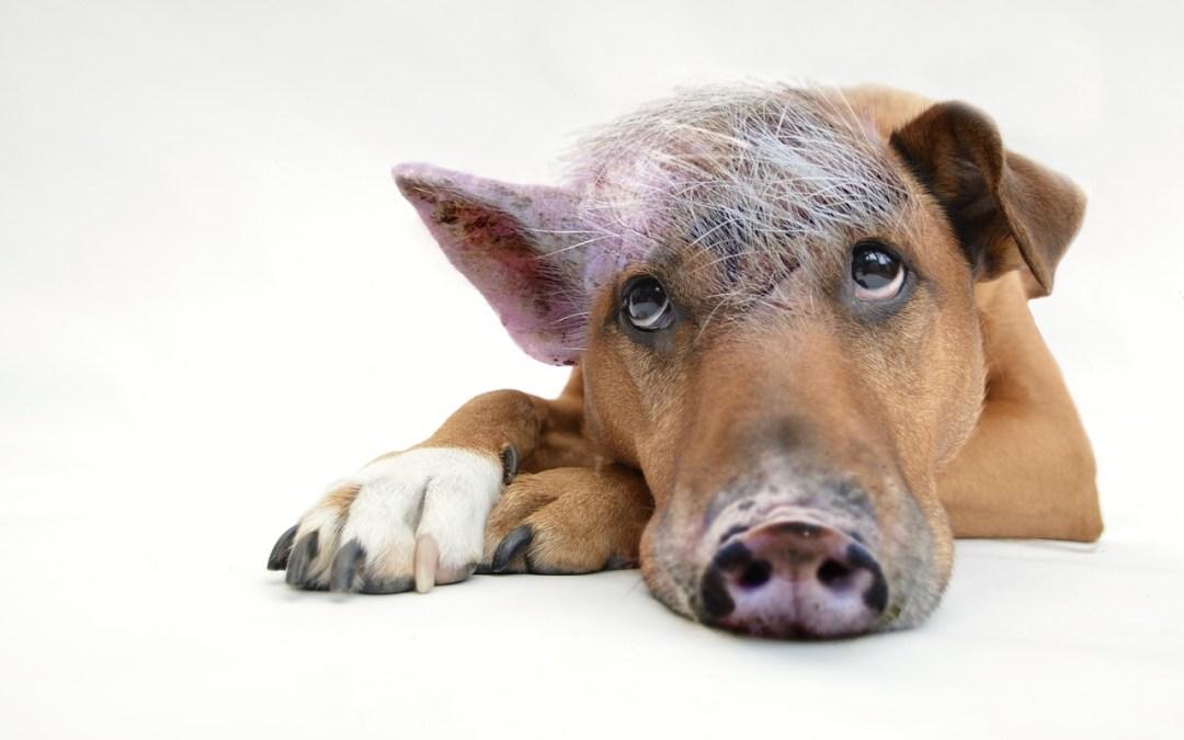 Folge 14: Dein innerer Schweinehund die fiese Sau