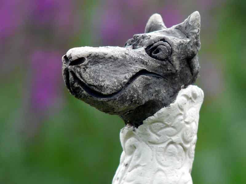 Der Wolf im Schafspelz Zaunhocker