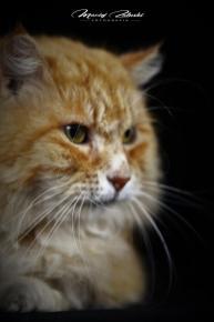 Kot Persil Sesja w studiu 11 01 2019 Fot Maciej Załuski