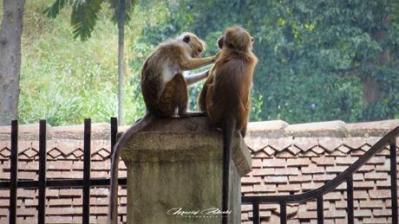 Srilanka-słonie-bawoły-safari-małpy-październik-2012-Fot-Maciej-Załuski-11