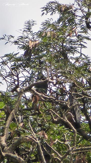 Srilanka-słonie-bawoły-safari-małpy-październik-2012-Fot-Maciej-Załuski-5