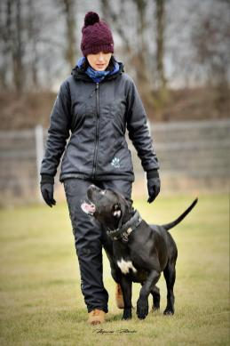 Trening IPO we Wrocławiu 02 02 2019 portrety psy posłuszeństwo obrona Fot Maciej Zaluski