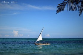 Zanzibar-Masajowie-Masajki-Ocean-Owoce-warzywa-plaża-ludzie-Małpka-Fot.Macie-30