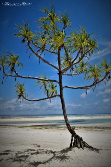 Zanzibar-Masajowie-Masajki-Ocean-Owoce-warzywa-plaża-ludzie-Małpka-Fot.Macie-37