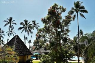 Zanzibar-Masajowie-Masajki-Ocean-Owoce-warzywa-plaża-ludzie-Małpka-Fot.Macie-4