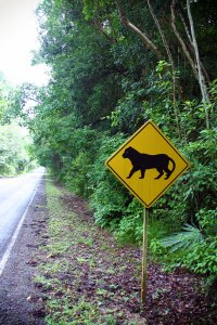 Jaguar Crossing, TIkal