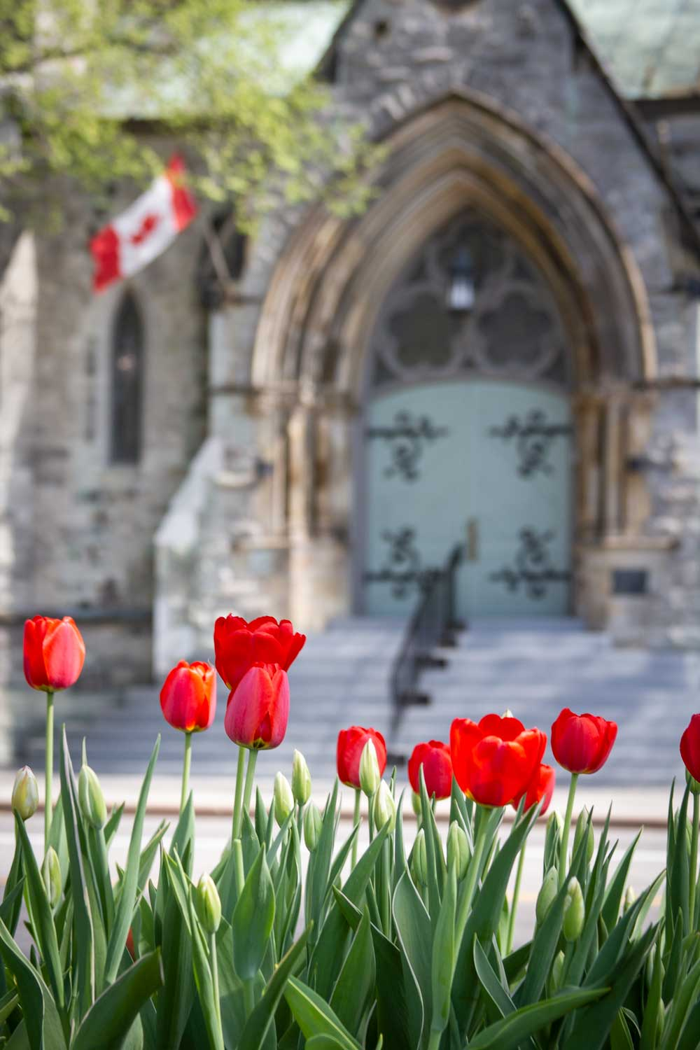 Church, Ottawa, Tulips