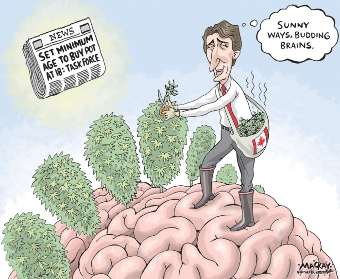 Editorial Cartoon by Graeme MacKay, The Hamilton Spectator Ð Friday, December 16, 2016 Trudeau Comfortable With Minimum Age Of 18 To Buy Legal Pot Prime Minister Justin Trudeau thinks Canadians old enough to drink alcohol are old enough to smoke marijuana legally. Trudeau made the comment a press conference in Ottawa Thursday, days after aÊfederal task force on marijuana legalizationÊrecommended the national minimum age to buyÊrecreational marijuana beÊset at 18. The report also suggested provinces and territories be permitted to raise the age to harmonize with alcohol consumption laws. In most provinces, the legal drinking age is 19. In Quebec, Manitoba, and Alberta, the age limit is 18. The Canadian Medical Association had urged the task force to recommend aÊminimum age of 21, pointing to evidence that brains are stillÊdeveloping until the age of 25. The prime minister, who has long said pot legalization is about keeping the drug away from children and profits away from criminals, told reporters the task forceÕsÊrecommendation felt like a ÒreasonableÓ compromise. ÒWe know the largest misdeeds of marijuana use happens at a lower age than 18, 19 years of age, and I think this is a responsible approach that we have found in terms ofÊbalance that is both practical and useful,Ó he said in French. The task force, chaired by former Liberal justice minister Anne McLellan, acknowledged in its report that there are aÊrange of viewsÊon the right age to be able to buy legal pot. Setting the age too high risks Òpreserving the illicit market,Ó the report reads, and raising the possibility young Canadians will face criminal records since Òthe highest rates ofÊuse are in the 18 to 24 age range.Ó The report also said a minimum age of 25, as recommended by the CMA, was ÒunrealisticÓ and would force many young Canadians to turn to the black market. (Source: Huffington Post)Êhttp://www.huffingtonpost.ca/2016/12/15/trudeau-pot-age-18-task-force_n_13656050.html Canada, marij