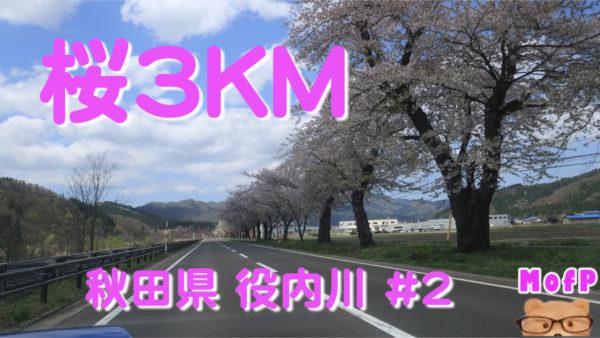 ~桜が3キロ以上つづく~役内川,桜並木~その2~