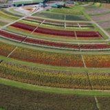 ~フラワーランドかみふらの~花と造形の美~北海道 空知郡 上富良野町