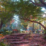 日比谷公園の木漏れ日と紅葉~東京~紅葉めぐり2019