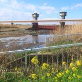 【堰】茨城の福岡堰 さくら公園 ドローン空撮、関東の三大堰だそうです。