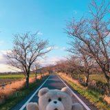 【桜・筑波自転車道】どこまでまっすぐなんだ。いいねえ。茨城県