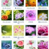 花の時期 月別カレンダー