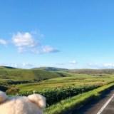 日本最北、宗谷岬の宗谷丘陵をドライブ、動画、宗谷周氷河ロード【ゼロ密ドライブ2020北海道】絶景