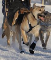 Sherpa in beast mode