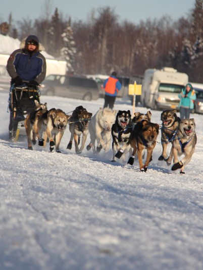 Knik 200 start 2015, photo by Julia Redington