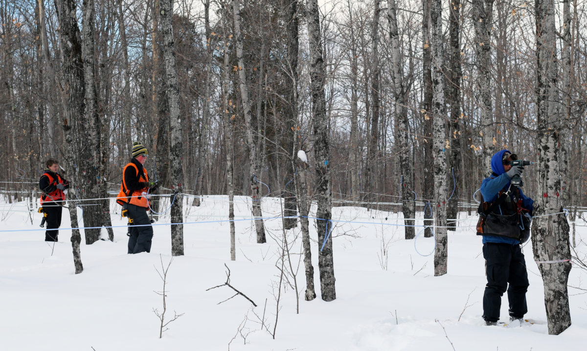 Three people in snowy woods tapping maple trees
