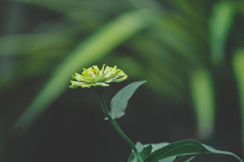 greenish preset for lightroom preset