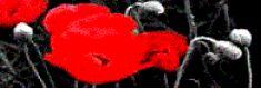 (c) Tall Poppies