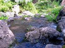 A Shallow Pool Along 'Īao Stream