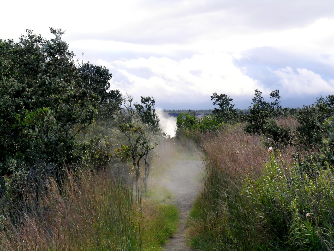 Steam from Steam Vents on the 'Iliahi Trail (2)