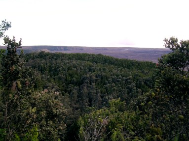 The Forest Inside the Kīlauea Caldera