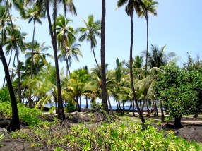 The Royal Grounds of Pu'uhonua o Hōnaunau