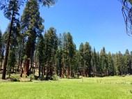 Crescent Meadow 4