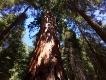 Trail of the Sequoias 7
