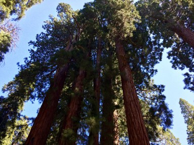 Trail of the Sequoias 17