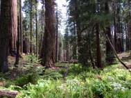 Moro Rock Trail 7