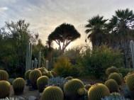 Desert Garden - 2