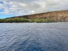 Dolphin Breach