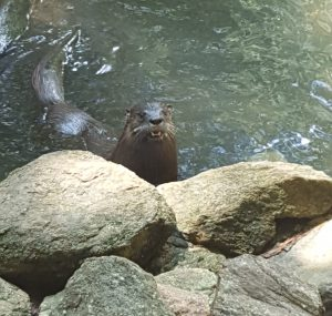 For a quarter, children can get food pellets to feed the river otters at Dauset Trails.