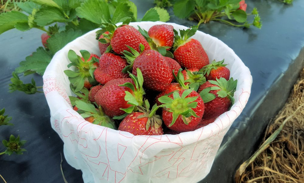 Elliot Farms Strawberries Macon Community News
