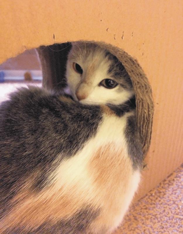 Circle of Friends Animal Society cat