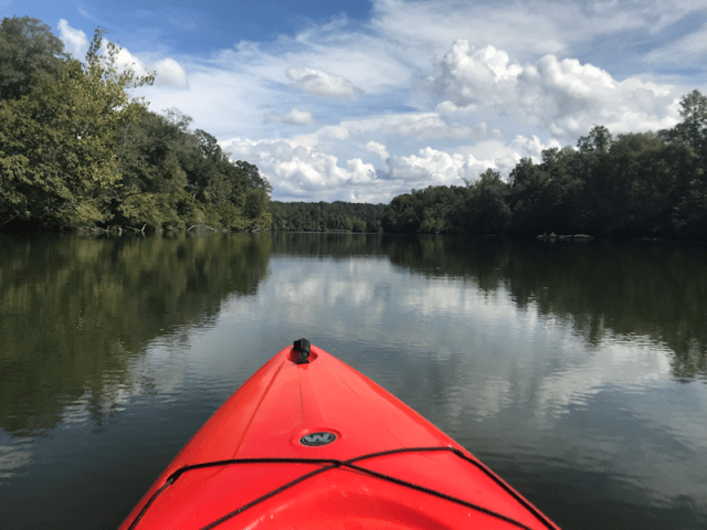Ocmulgee Outdoor Expeditions - View from Kayak of beautiful scenery