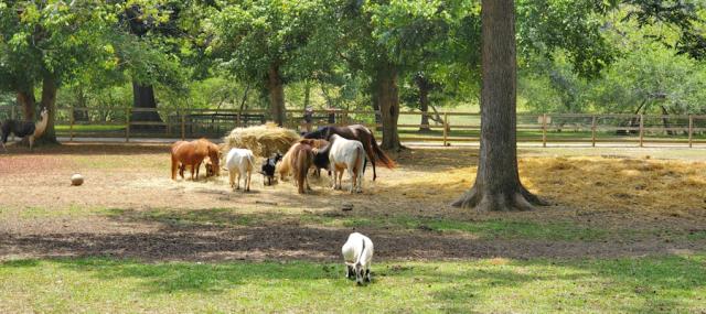 Animals Eating - Noah's Ark Animal Sanctuary